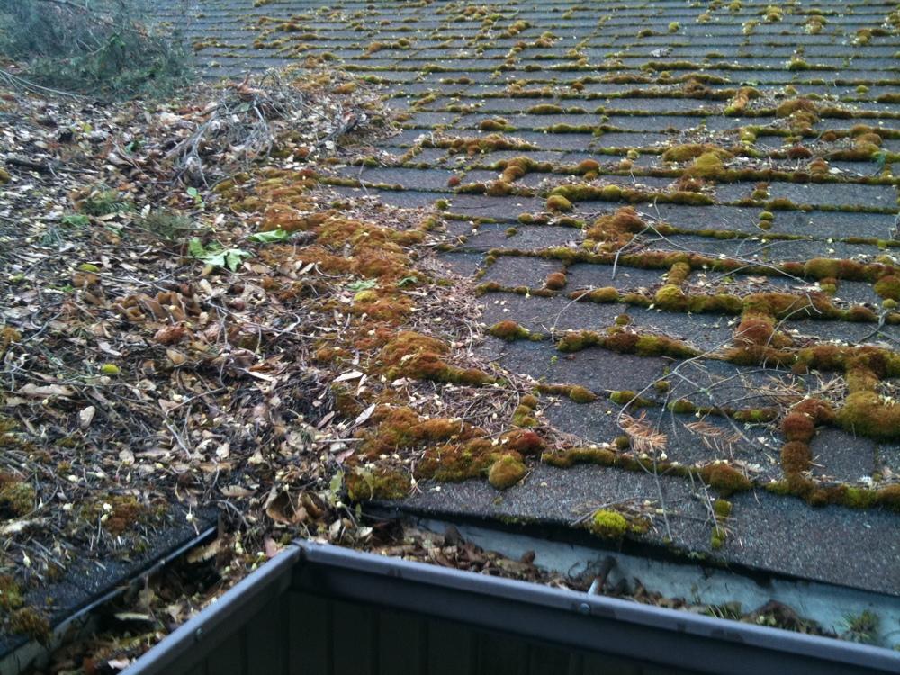 Roof Moss Treatment U0026 Removal