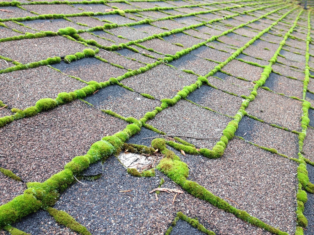 Roof Moss Treatment