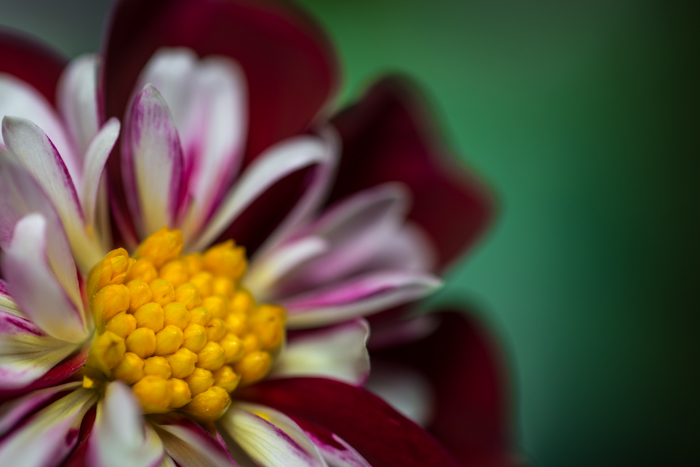 ann arbor dexter photographer flower floral garden gardens-3.jpg