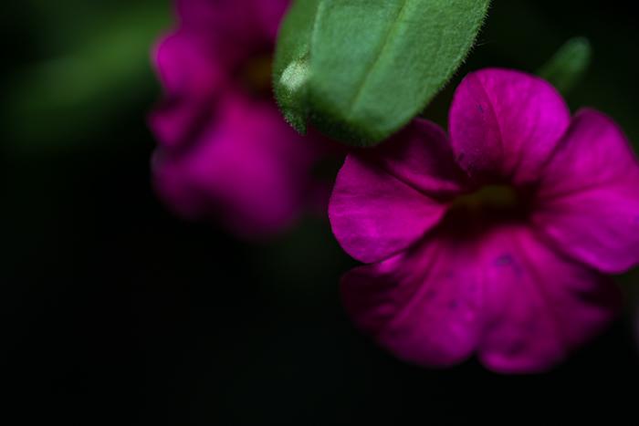ann arbor dexter photographer flower floral garden gardens-5.jpg
