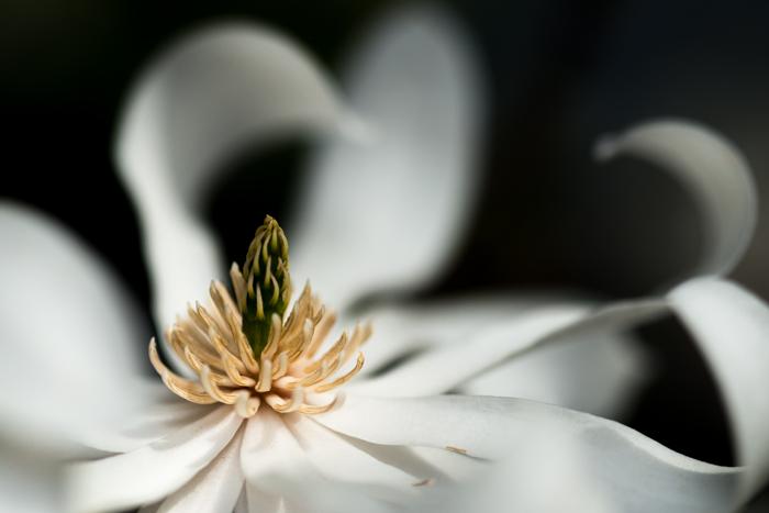 ann arbor dexter photographer flower floral garden gardens-2.jpg