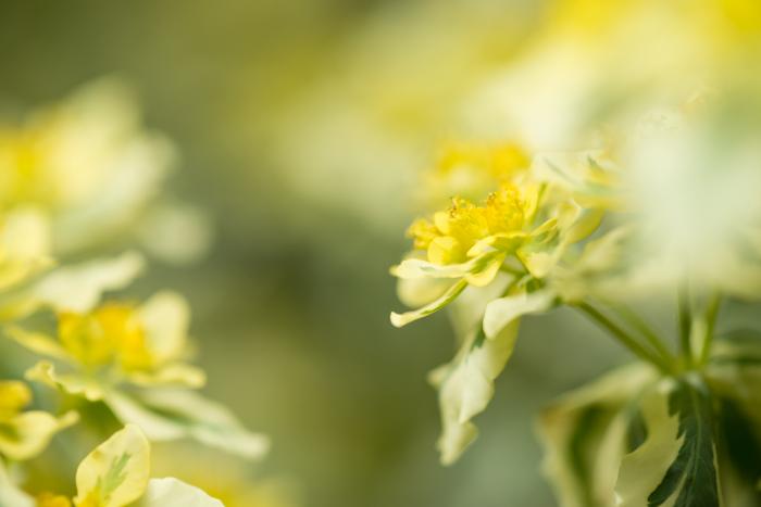 ann arbor dexter photographer flower floral garden gardens-7.jpg