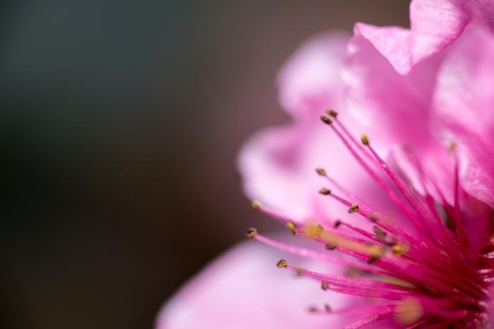 ann arbor dexter photographer flower floral garden gardens-8.jpg