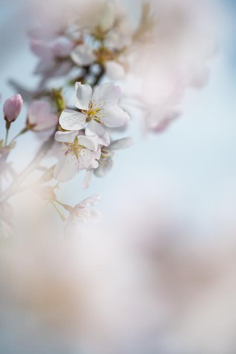 ann arbor dexter photographer flower floral garden gardens-16.jpg