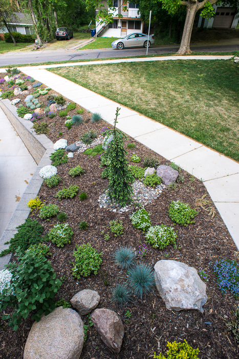 DSC_0035 - ann arbor photographer lotus garden.jpg