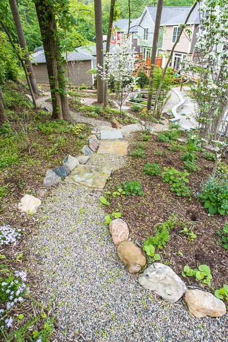 DSC_0057 - ann arbor photographer lotus garden.jpg