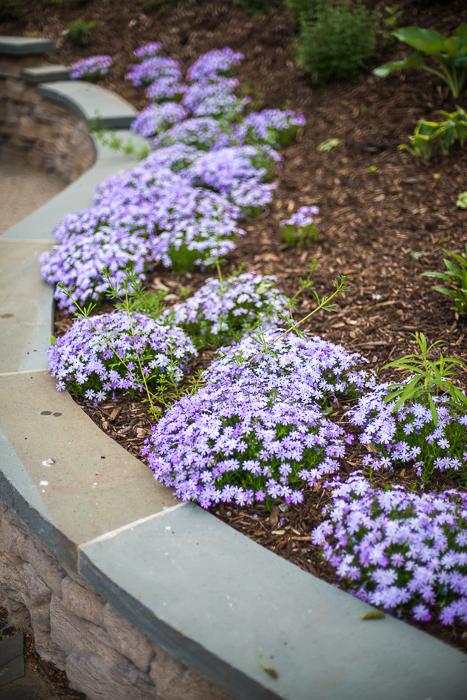 DSC_0070 - ann arbor photographer lotus garden.jpg