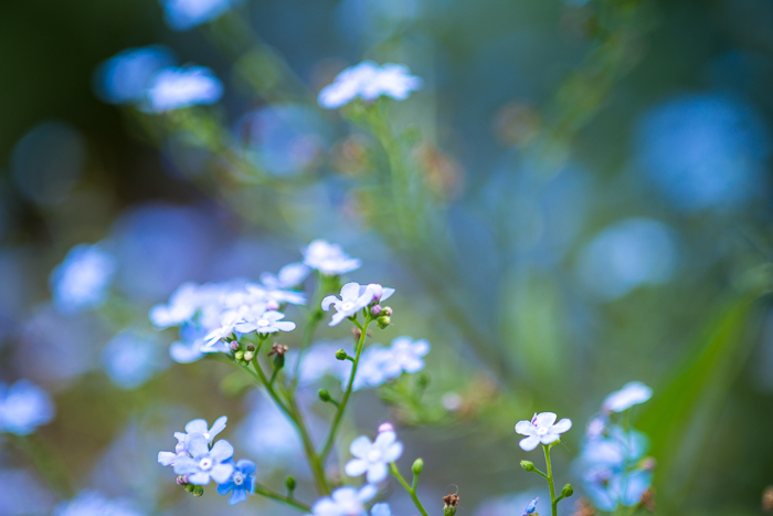 DSC_0122 - ann arbor photographer lotus garden.jpg