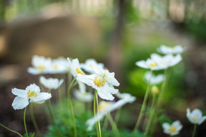 DSC_0148 - ann arbor photographer lotus garden.jpg