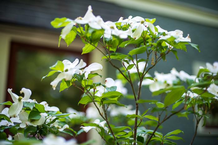 DSC_0158 - ann arbor photographer lotus garden.jpg