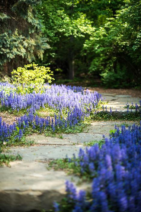 DSC_0162 - ann arbor photographer lotus garden.jpg