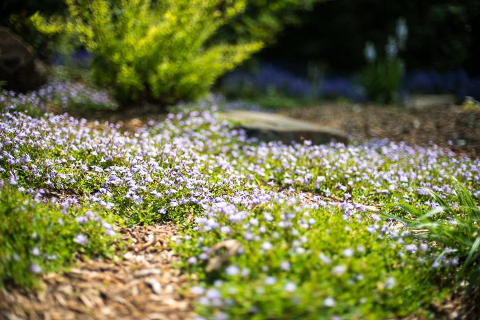 DSC_0169 - ann arbor photographer lotus garden.jpg