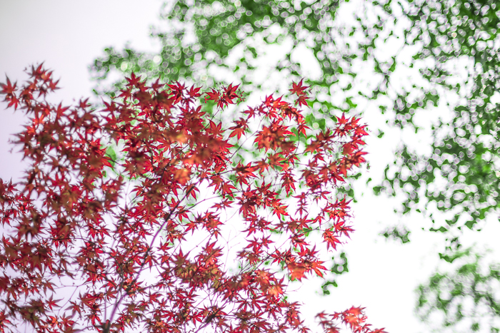DSC_0171 - ann arbor photographer lotus garden.jpg
