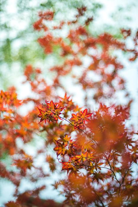 DSC_0177 - ann arbor photographer lotus garden.jpg
