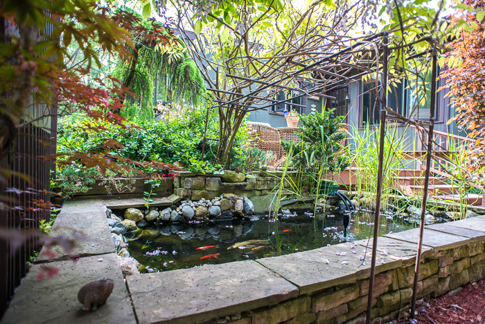 DSC_0203 - ann arbor photographer lotus garden.jpg