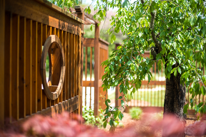DSC_0447 - ann arbor photographer lotus garden.jpg