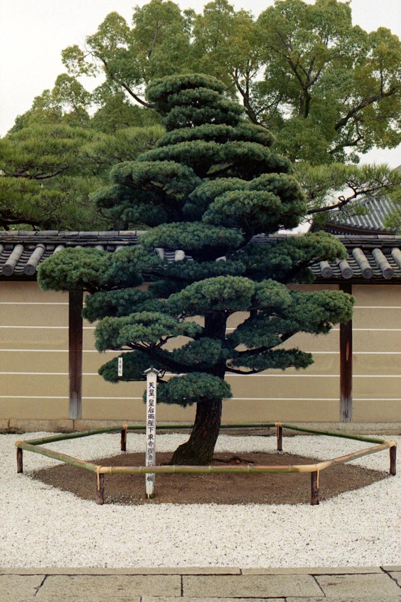 kyoto-002.jpg