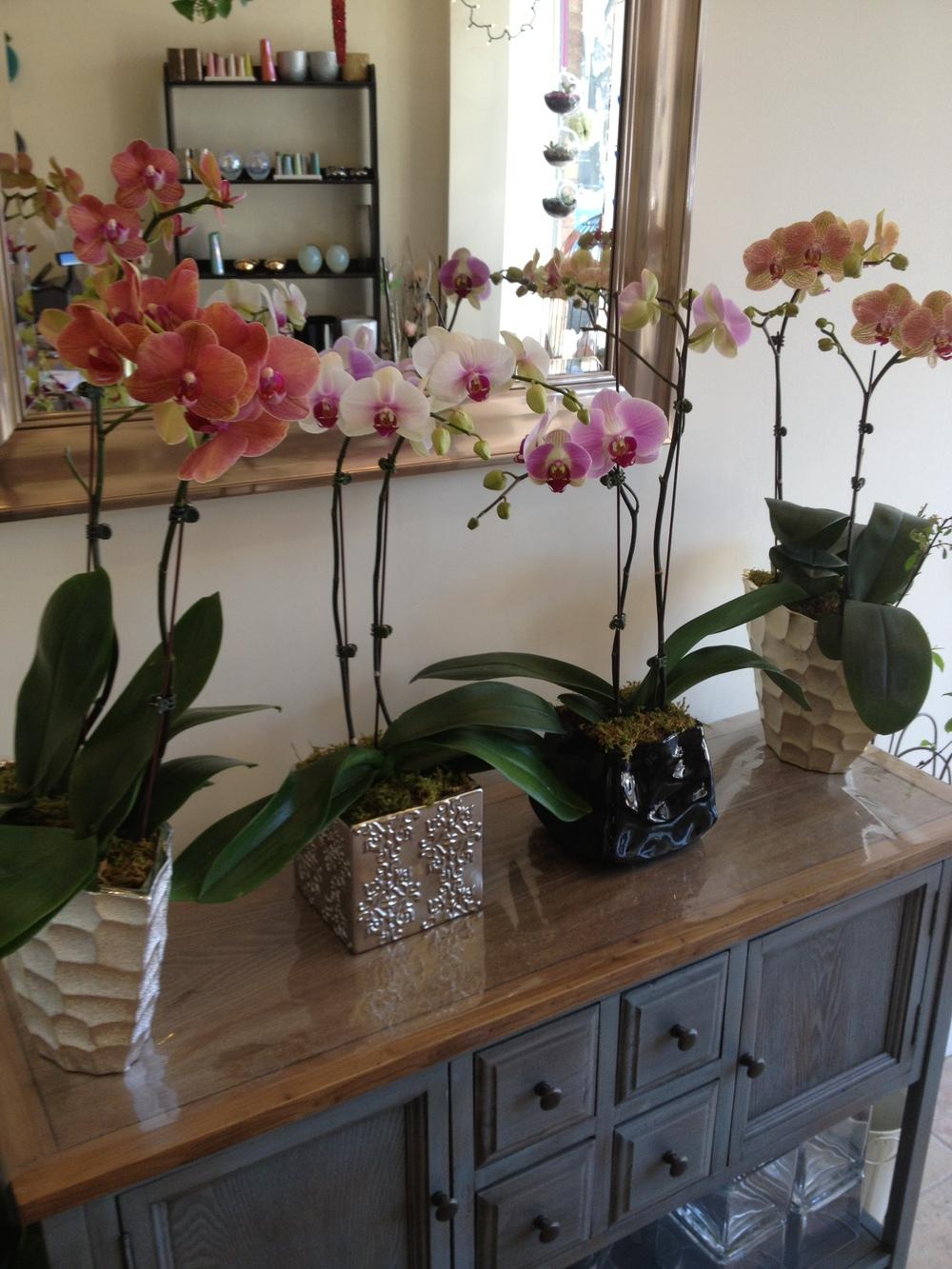 Orchids, $55 - $129