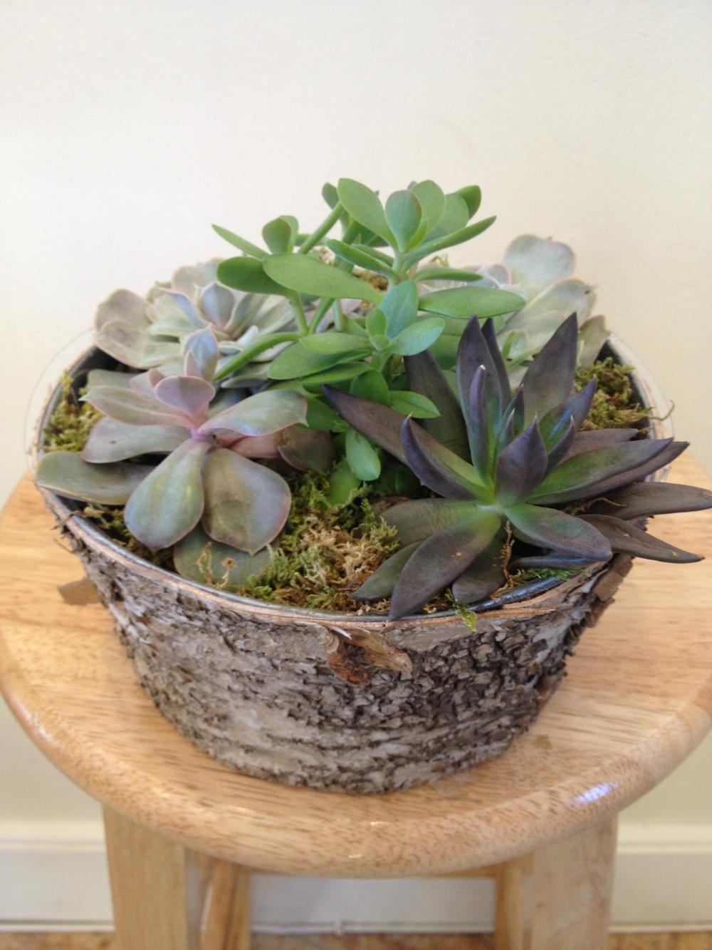 Succulent Garden, $50 - $75