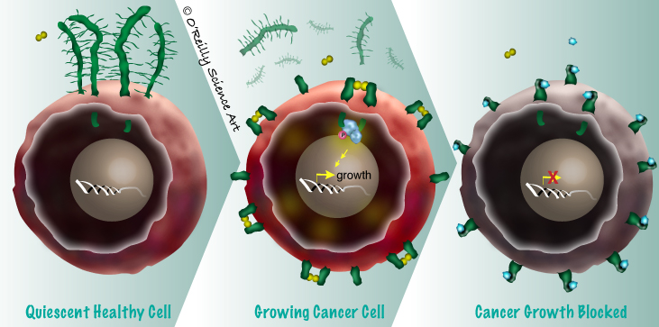 And this one illustrates Minerva's strategy for targeting a key growth regulator in certain types of cancer.
