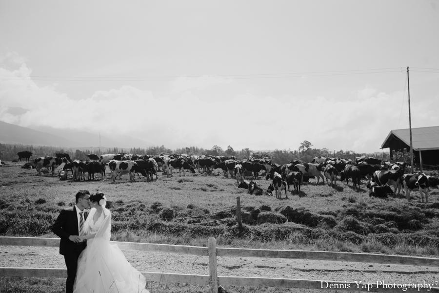 Dylan Jennifer Kundasang Dairy Farm Dennis Yap Photography Pre Wedding Keith Kee-10.jpg
