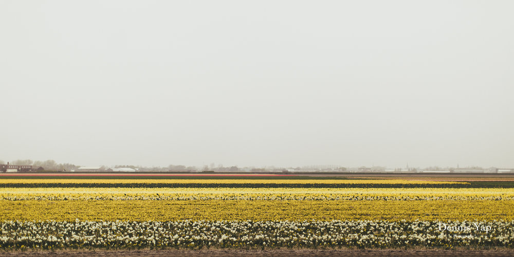 michael jacelyn amterstam pre wedding holland europe dennis yap photography beloved windmill-9.jpg
