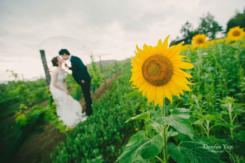 ka wing yen yen prewedding hokkaido japan sunflower field beloved natural candid dennis yap photography-29.jpg