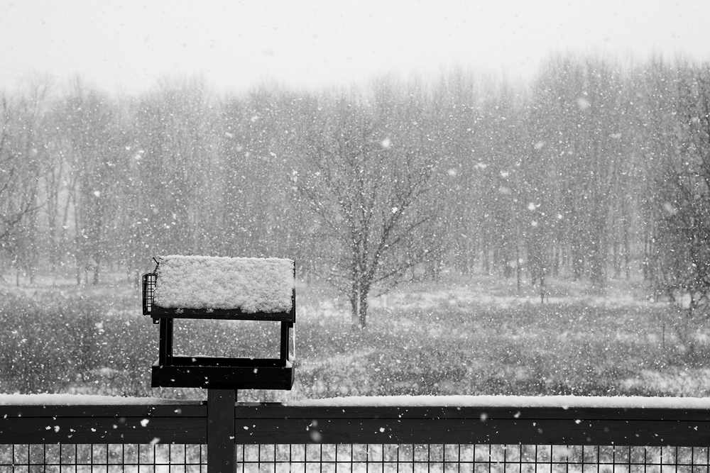 snow_25.jpg