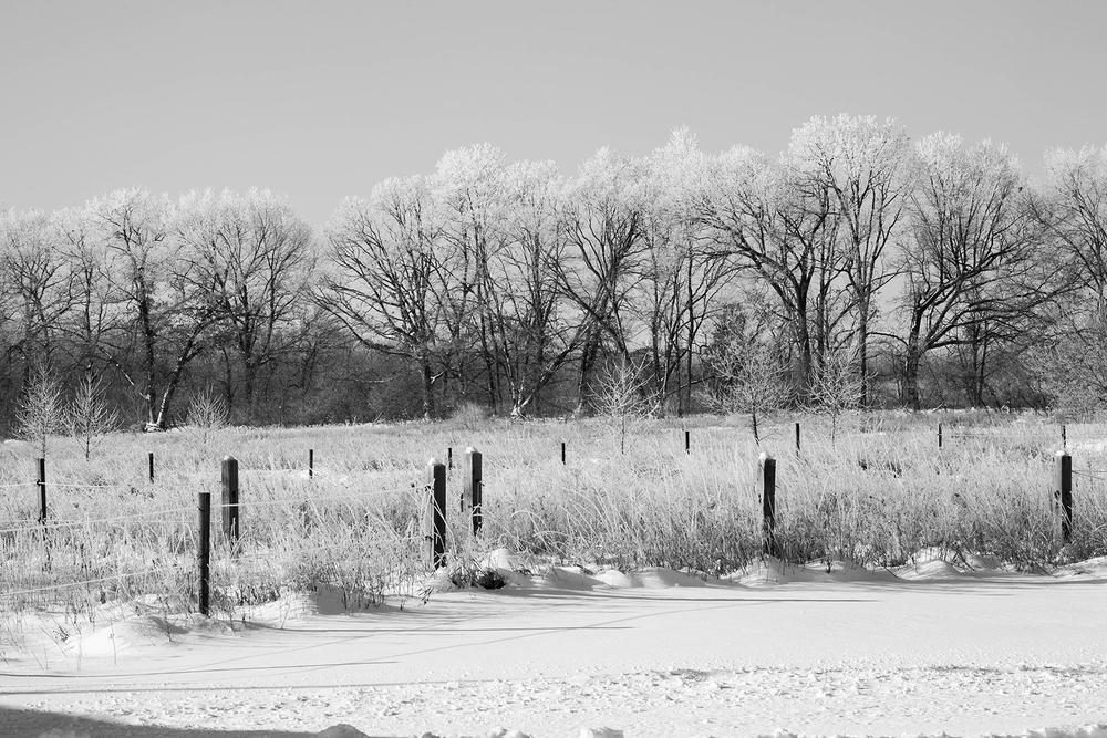 snow_test (4 of 1).jpg
