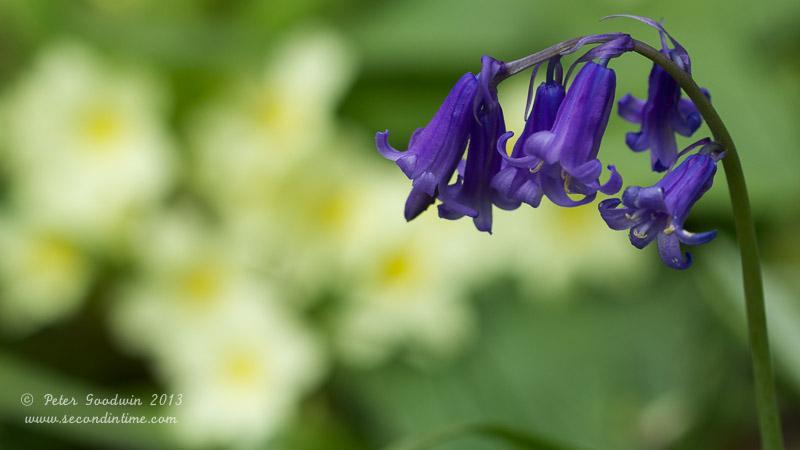 flora (3).jpg