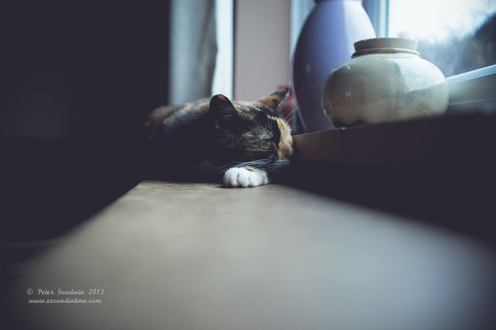 Lazy Afternoon.jpg