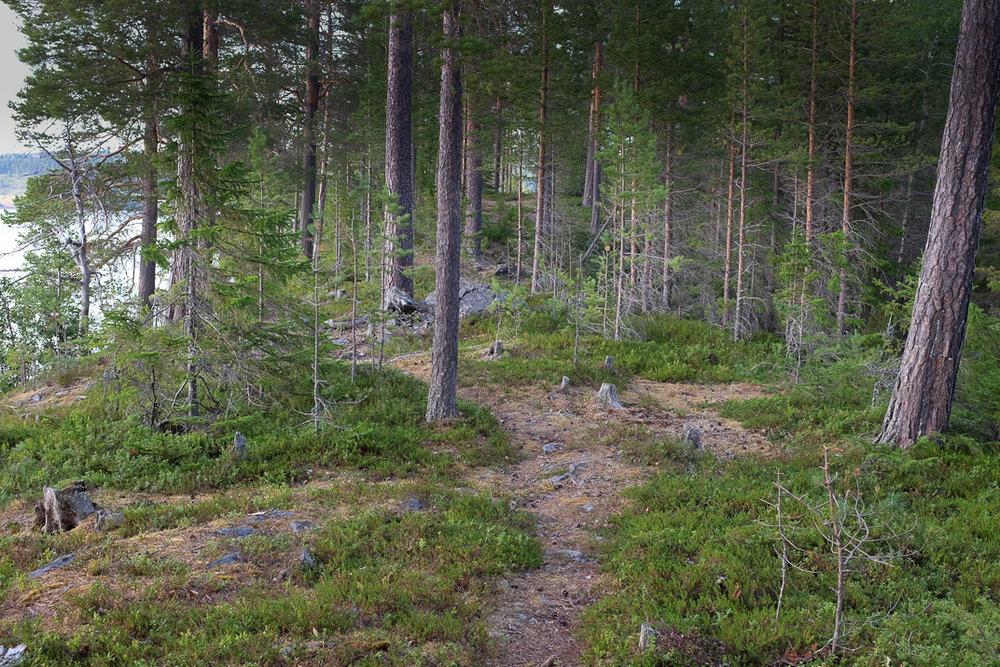 Sweden 2018-33.jpg