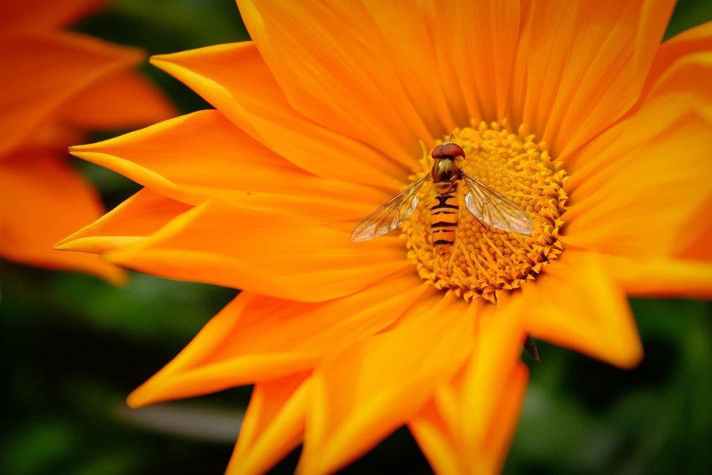 Summer Flys-3.jpg