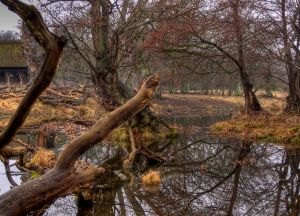 wilderness---hdr-1161412-m.jpg