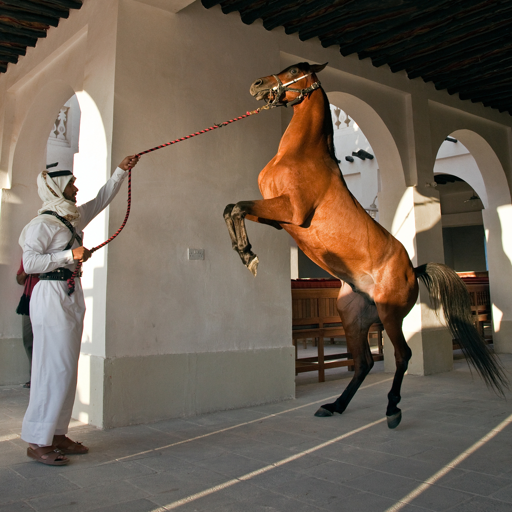 Arab Stallion (edited)(1).jpg