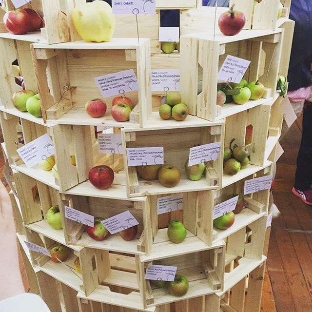 Discovered the #arkoftaste apples from around the world at @terramadre_salonedelgusto Such diversity of shape, colour and texture #biodiversity #apples #globalexchange #applesvarieties #communityorchard #orchards