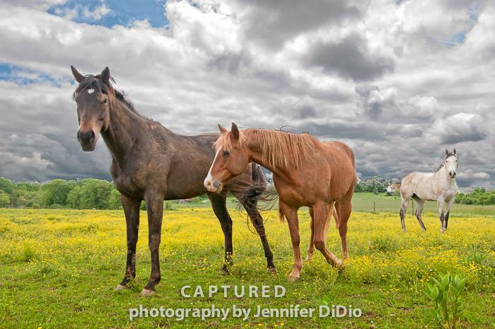 horses-9.jpg