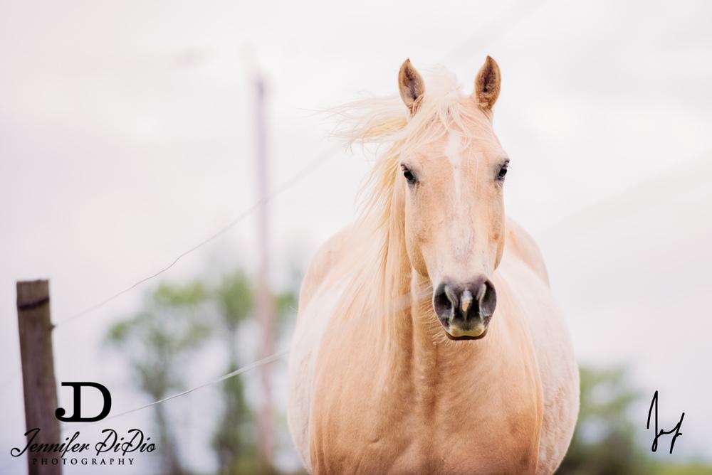 horses-buttercups-may-32-Edit.jpg
