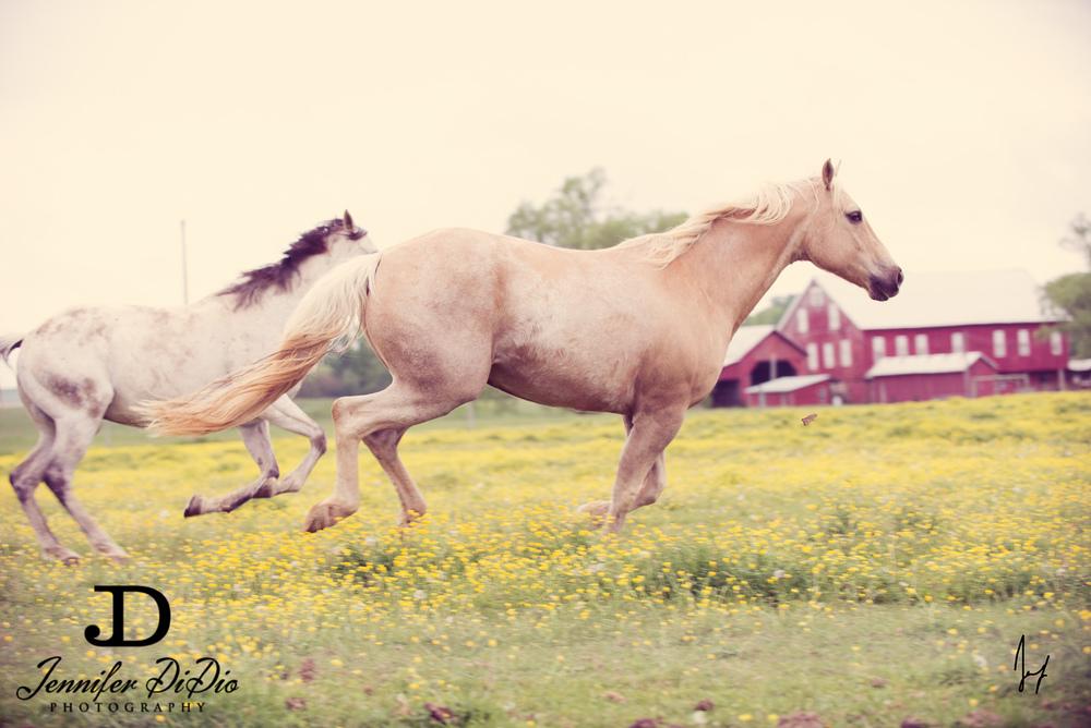 horses-buttercups-may-35-Edit.jpg