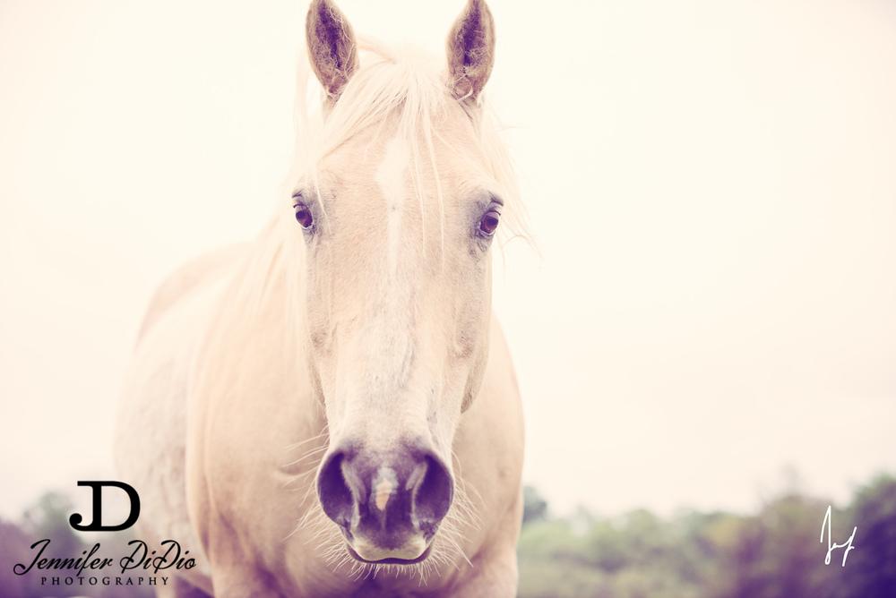 horses-buttercups-may-61-Edit.jpg