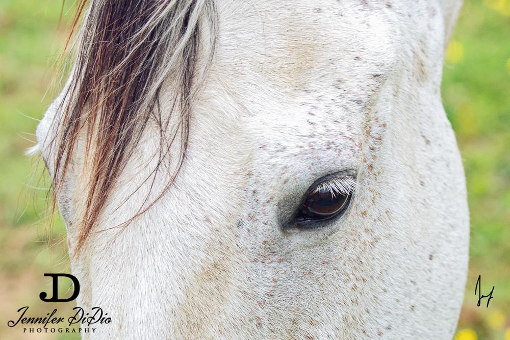 horses-buttercups-may-72-Edit.jpg