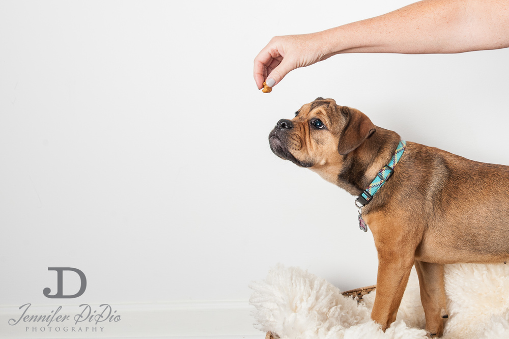 Jennifer.DiDio.Photography.zophy.findy.dog.2013-2.jpg