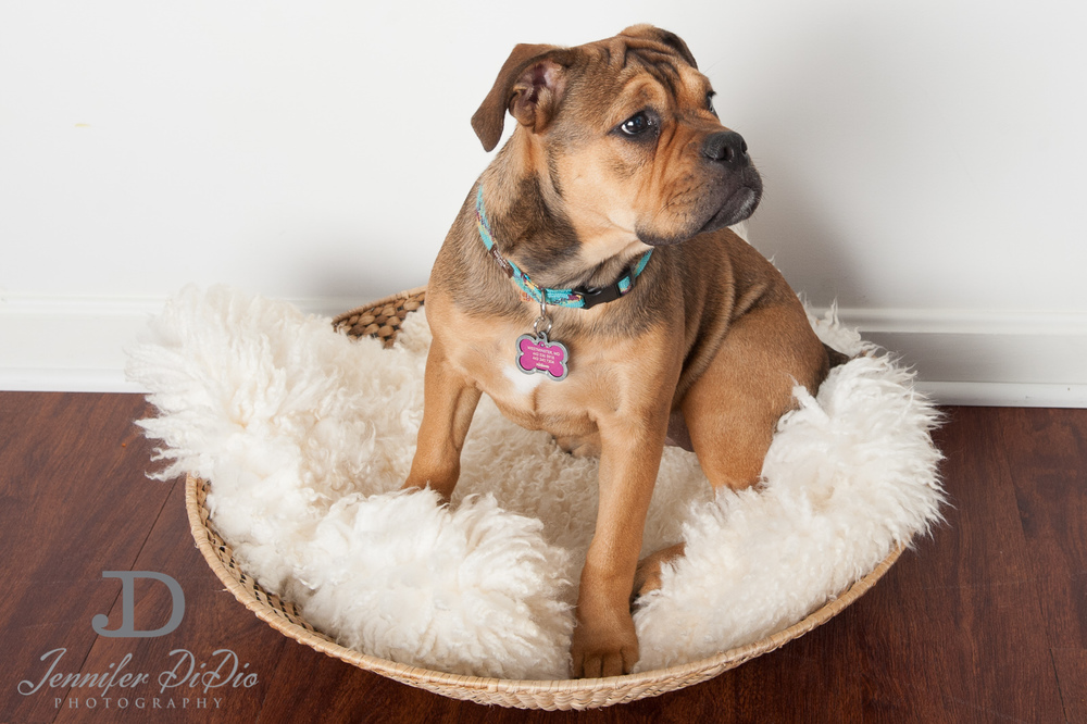 Jennifer.DiDio.Photography.zophy.findy.dog.2013-3.jpg