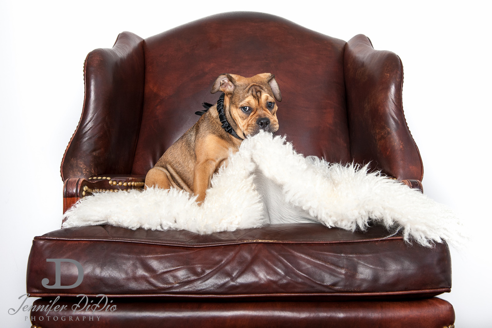 Jennifer.DiDio.Photography.zophy.findy.dog.2013-9.jpg