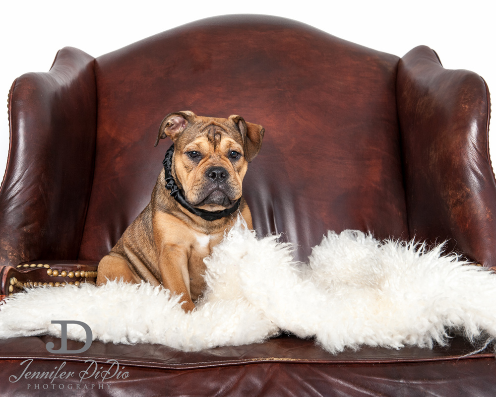 Jennifer.DiDio.Photography.zophy.findy.dog.2013-10.jpg