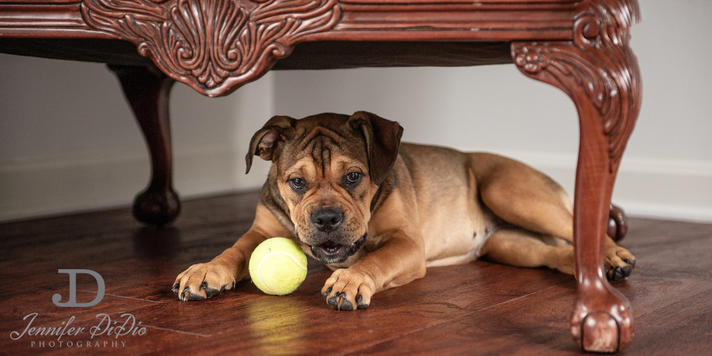 Jennifer.DiDio.Photography.zophy.findy.dog.2013-20.jpg