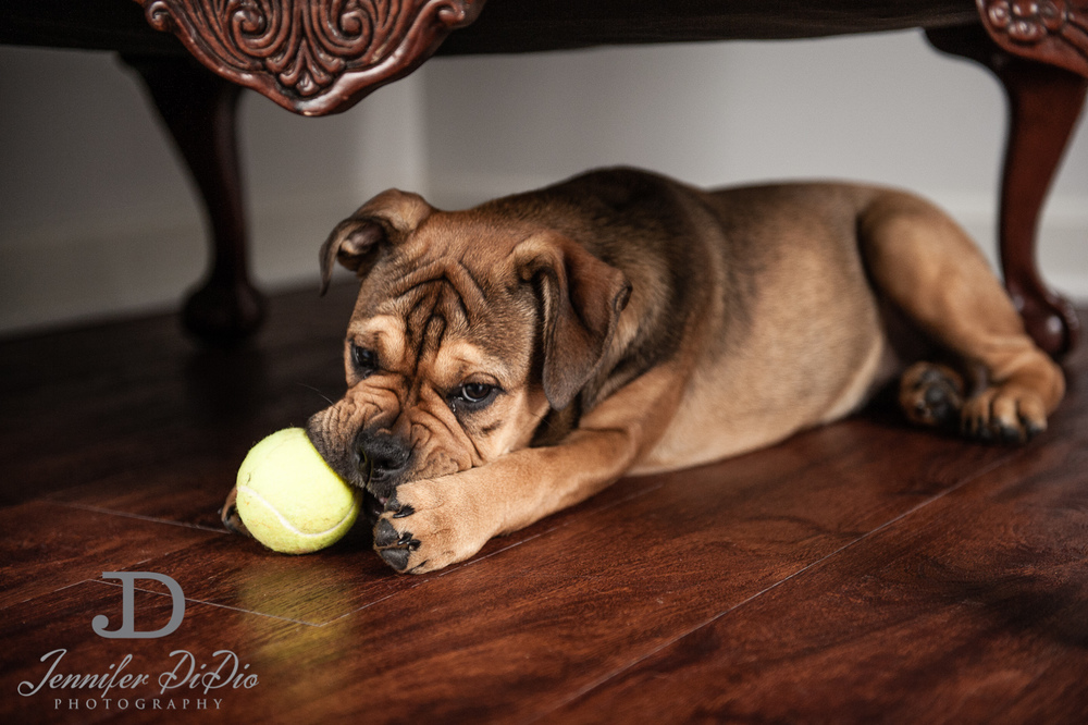 Jennifer.DiDio.Photography.zophy.findy.dog.2013-21.jpg