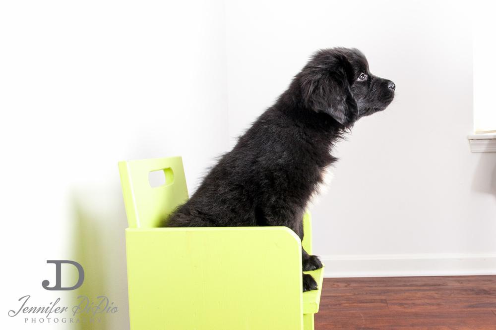 Jennifer.DiDio.Photography.larrick.finn.dog.2013-12.jpg