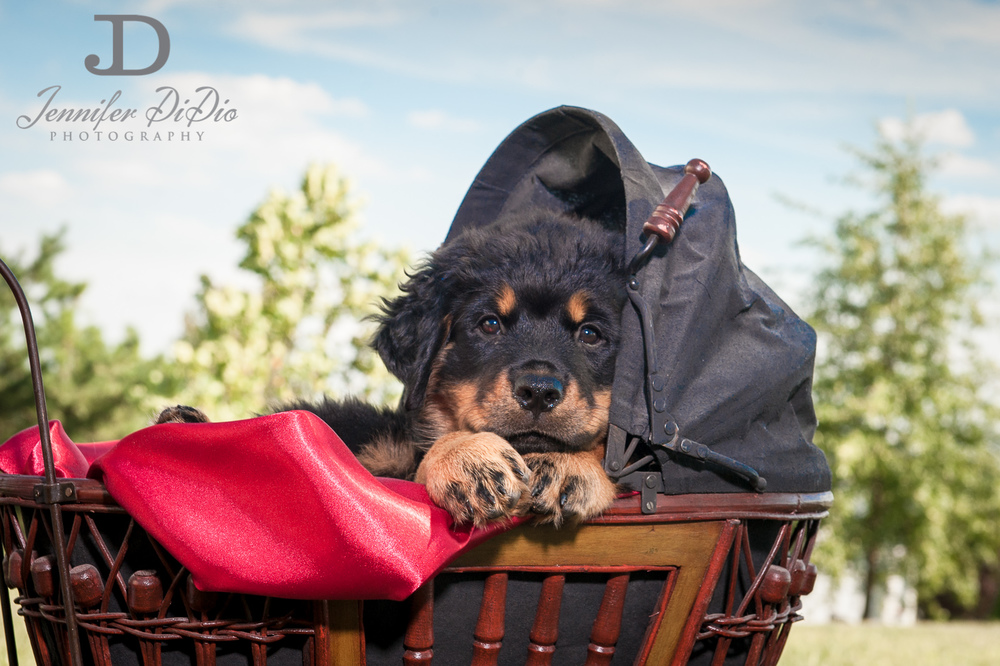 Jennifer.DiDio.Photography.puppy.Stone.Ruby.Madeline-104.jpg