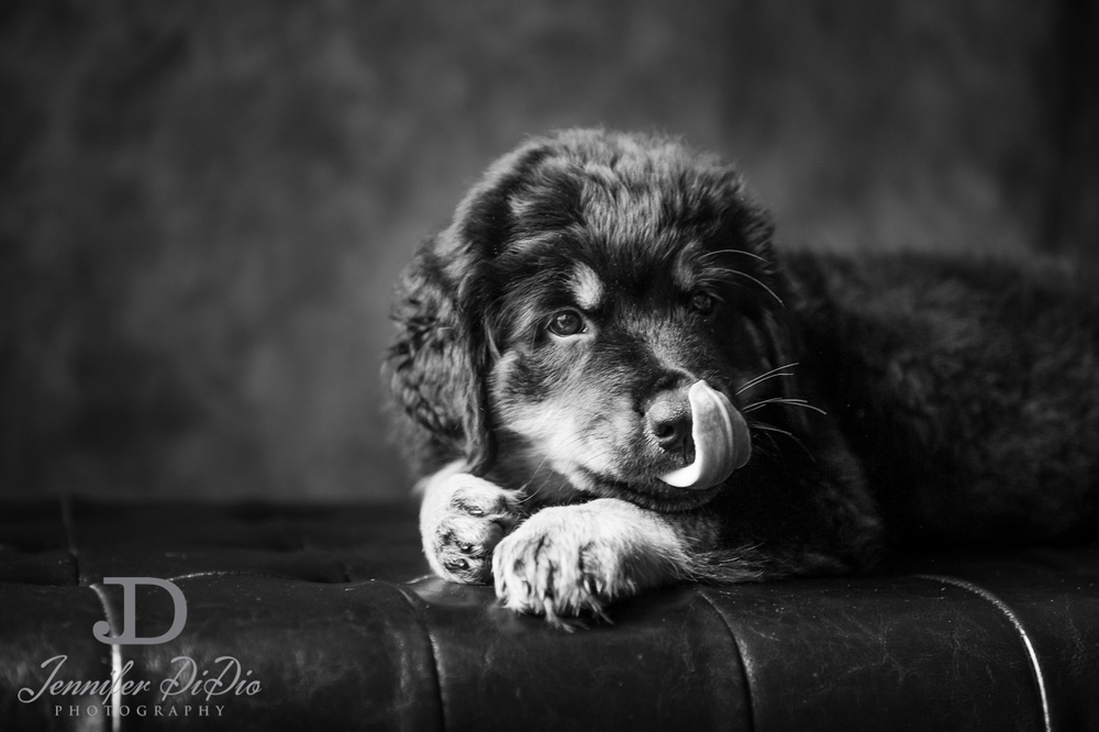 Jennifer.DiDio.Photography.puppy.Stone.Ruby.Madeline-130.jpg